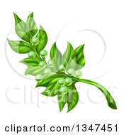 Clipart Of A Green Peace Olive Branch With Tiny Fruits Royalty Free Vector Illustration