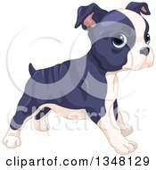 Clipart Of A Cute Boston Terrier Or French Bulldog Puppy Standing Facing Right Royalty Free Vector Illustration by Pushkin