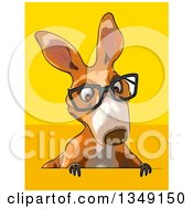 Clipart Of A Cartoon Bespectacled Kangaroo On Yellow And Orange Royalty Free Illustration