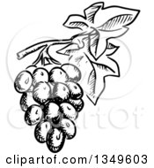 Clipart Of Black And White Sketched Grapes Royalty Free Vector Illustration