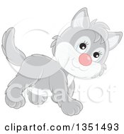 Clipart Of A Cute Gray And White Kitten Walking Royalty Free Vector Illustration