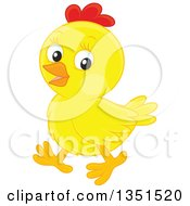 Cute Yellow Chick Walking