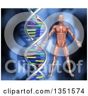 Clipart Of A 3d Medical Anatomical Male With Visible Muscles Over A Blue DNA Background Royalty Free Illustration