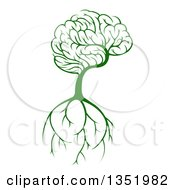Green Knowledge Brain Canopied Tree With Roots
