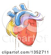 Clipart Of A Sketched Colorful Human Heart Pulsating Royalty Free Vector Illustration