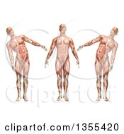 Clipart Of A 3d Anatomical Man With Visible Muscles Showing Trunk Lateral Bending On A White Background Royalty Free Illustration