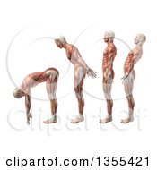 Clipart Of A 3d Anatomical Man With Visible Muscles Showing Trunk Flexion Extension And Hyerextension On A White Background Royalty Free Illustration