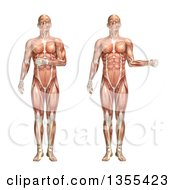 Clipart Of A 3d Anatomical Man With Visible Muscles Showing Shoulder Internal And External Rotation On A White Background Royalty Free Illustration