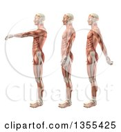 Clipart Of A 3d Anatomical Man With Visible Muscles Showing Shoulder Flexion Extension And Hyperextension On A White Background Royalty Free Illustration