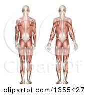 Clipart Of A 3d Rear View Of An Anatomical Man With Visible Muscles Showing Scapula Protraction And Retraction On A White Background Royalty Free Illustration