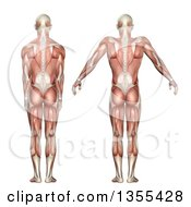Clipart Of A 3d Rear View Of An Anatomical Man With Visible Muscles Showing Scapula Elevation And Depression On A White Background Royalty Free Illustration