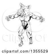 Clipart Of A Black And White Muscular Fox Man Mascot Lunching Forward To Attack Royalty Free Vector Illustration by AtStockIllustration