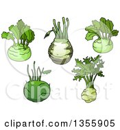 Clipart Of Cartoon Kohlrabis Royalty Free Vector Illustration by Vector Tradition SM