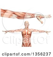 Clipart Of A 3d Anatomical Man With Visible Muscles Showing Elbow Pronation On A White Background Royalty Free Illustration