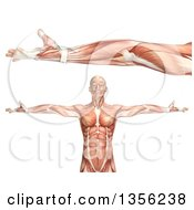 Clipart Of A 3d Anatomical Man With Visible Muscles Showing Elbow Supination On A White Background Royalty Free Illustration