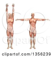 Clipart Of A 3d Anatomical Man With Visible Muscles Showing Shoulder Abduction And Adduction On A White Background Royalty Free Illustration