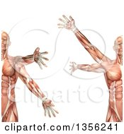 Clipart Of A 3d Anatomical Man With Visible Muscles Showing Circumduction On A White Background Royalty Free Illustration