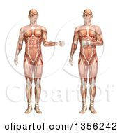 Clipart Of A 3d Anatomical Man With Visible Muscles Showing External And Internal Rotation On A White Background Royalty Free Illustration