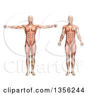 Clipart Of A 3d Anatomical Man With Visible Muscles Showing Shoulder Scaption On A White Background Royalty Free Illustration by KJ Pargeter
