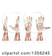 Clipart Of A 3d Anatomical Man With Visible Muscles Showing Thumb Abduction Adduction Extension And Flexion On A White Background Royalty Free Illustration