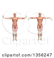 Clipart Of A 3d Anatomical Man With Visible Muscles Showing Wrist Extension And Flexion On A White Background Royalty Free Illustration