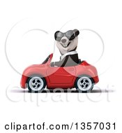 Clipart Of A 3d Business Panda Wearing Sunglasses And Driving A Red Convertible Car On A White Background Royalty Free Illustration
