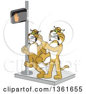 Clipart Of A Bobcat School Mascot Character Stopping Another From Using A Crosswalk At The Wrong Time Symbolizing Safety Royalty Free Vector Illustration