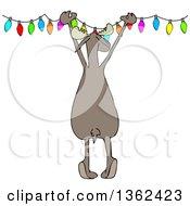 Cartoon Rear View Of A Festive Moose Hanging Christmas Lights