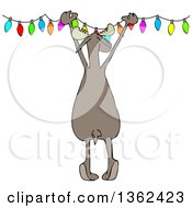 Clipart Of A Cartoon Rear View Of A Festive Moose Hanging Christmas Lights Royalty Free Vector Illustration by Dennis Cox