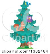 Squirrel Owl And Bluebird In An Evergreen Tree