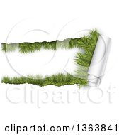 Clipart Of A Background Of Torn Curnling Paper Revealing Fir Branches Royalty Free Vector Illustration by vectorace