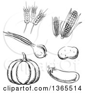 Clipart Of Black And White Sketched Vegetables And Wheat Royalty Free Vector Illustration