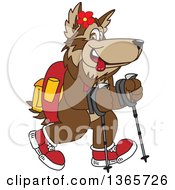 Clipart Of A Wolf School Mascot Using Sticks And Hiking Royalty Free Vector Illustration