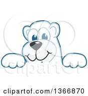 Polar Bear School Mascot Character Looking Over A Sign