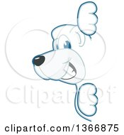 Clipart Of A Polar Bear School Mascot Character Looking Around A Sign Royalty Free Vector Illustration