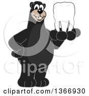 Clipart Of A Black Bear School Mascot Character Holding A Tooth Royalty Free Vector Illustration by Toons4Biz