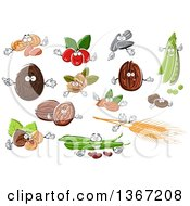 Clipart Of Peanuts Coconuts Coffee Berries Sunflower Seeds Peas Coffee Beans Walnuts Hazelnuts Wheat And Beans Royalty Free Vector Illustration