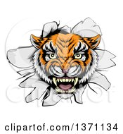Clipart Of A Mad Tiger Mascot Head Breaking Through A Wall Royalty Free Vector Illustration