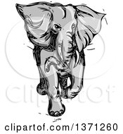 Clipart Of A Grayscale Sketched Angry Elephant Running Royalty Free Vector Illustration
