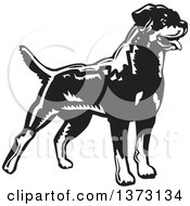 Clipart Of A Woodcut Standing Alert Rottweiler Dog In Black And White Royalty Free Vector Illustration