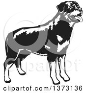 Clipart Of A Black And White Standing Rottweiler Dog Royalty Free Vector Illustration