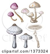 Clipart Of Different Mushrooms Royalty Free Vector Illustration by merlinul
