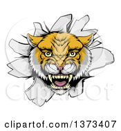 Clipart Of A Fierce Wildcat Mascot Head Roaring And Breaking Through A Wall Royalty Free Vector Illustration