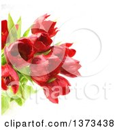 Red Oil Painted Tulips Over White