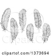 Clipart Of Grayscale Feathers Royalty Free Vector Illustration