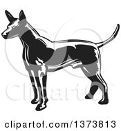 Clipart Of A Black And White Woodcut Xolo Mexican Hairless Dog Facing Left Royalty Free Vector Illustration by David Rey