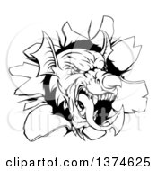 Clipart Of A Fierce Black And White Welsh Dragon Mascot Head Breaking Through A Wall Royalty Free Vector Illustration by AtStockIllustration