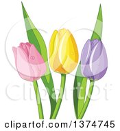 Pink Yellow And Purple Tulip Flowers