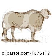 Clipart Of A Retro Sketched Brahman Bull Standing And Facing Right Royalty Free Vector Illustration by patrimonio
