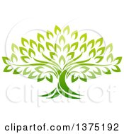 Clipart Of A Gradient Mature Green Tree Royalty Free Vector Illustration by AtStockIllustration